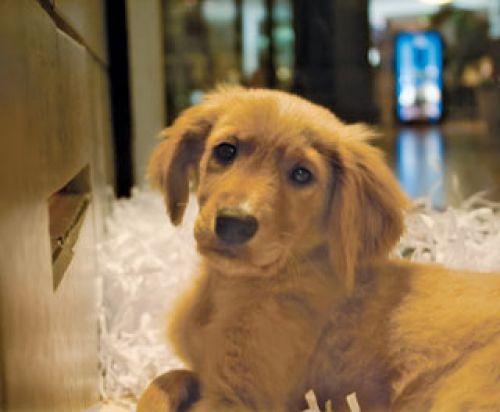 Dog Adoption Events Manhattan